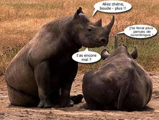 La sexualité des animaux: Rhinocéros cunnilingus humour